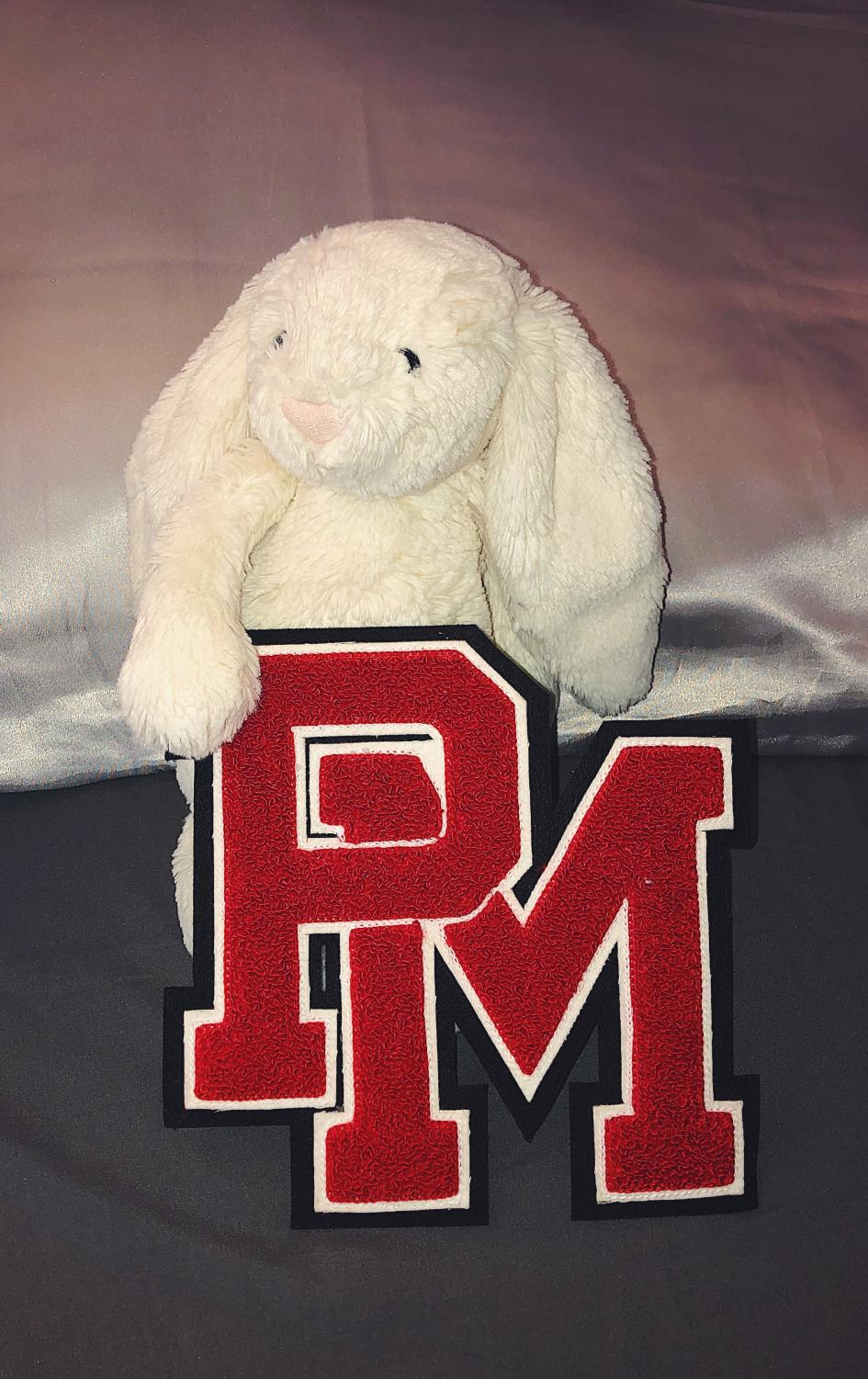 Which mascot would be the best fit for PMHS?