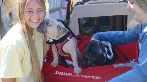 Puppy kisses at Dogfest 2021!